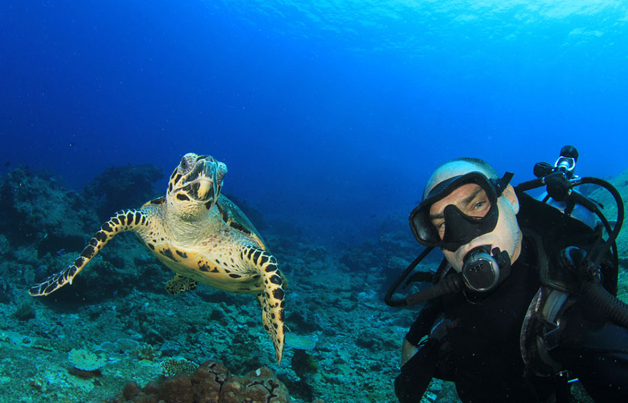 Schildkröte Tauchen Fidschi Inseln