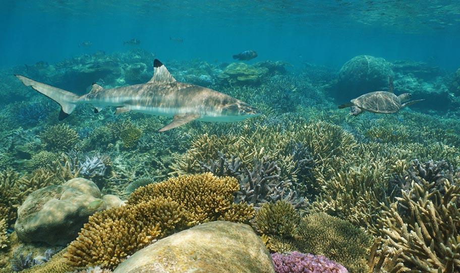 Hai Schildkröte Neukaledonien