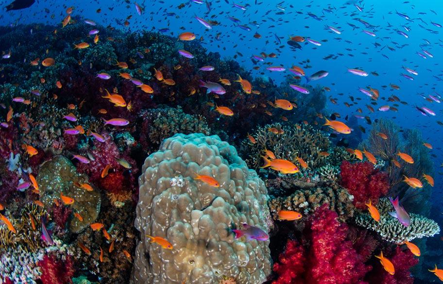 Fidschi Tauchen Fischschwarm